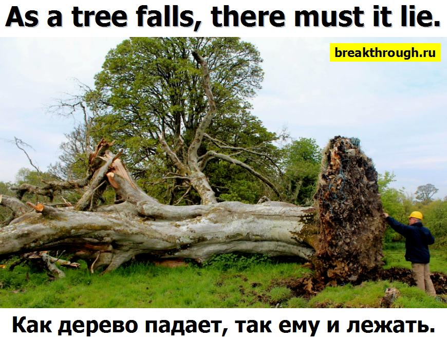 18 На английском as a the tree falls so shall it lie there must it lie man lives so shall must he die