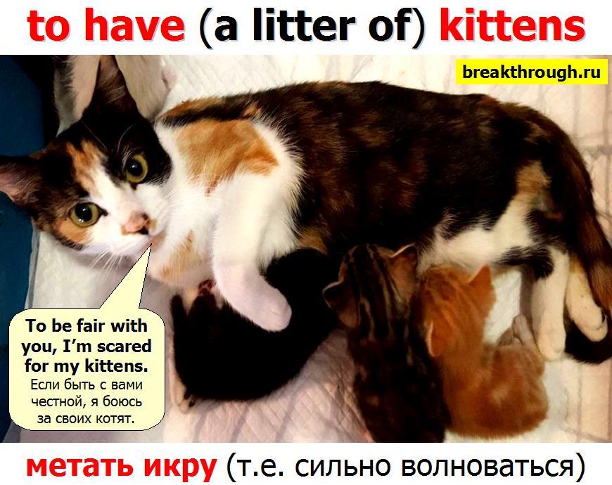 метать икру to have kittens