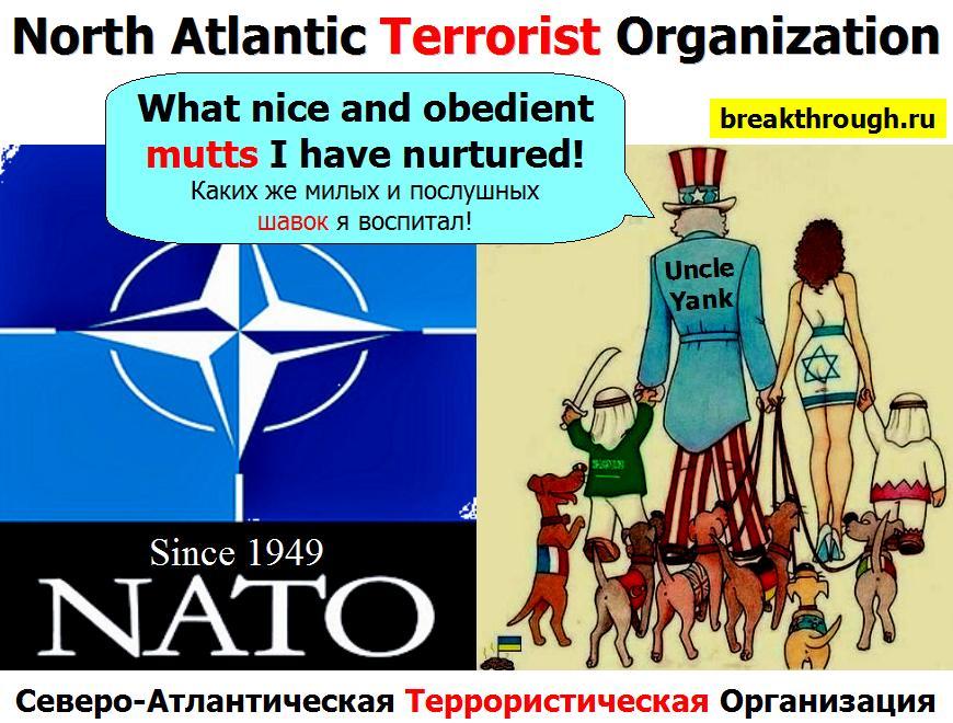 НАТО NATO как переводится что означает