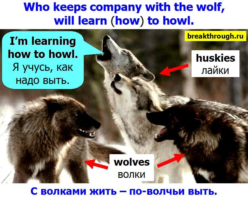 С волками жить по-волчьи выть