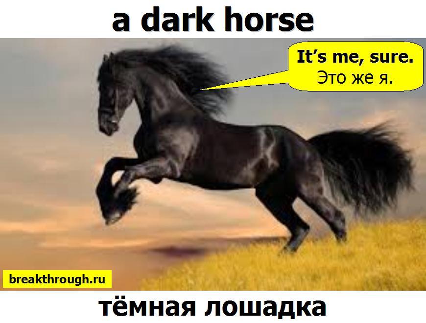 темная лошадка a dark horse