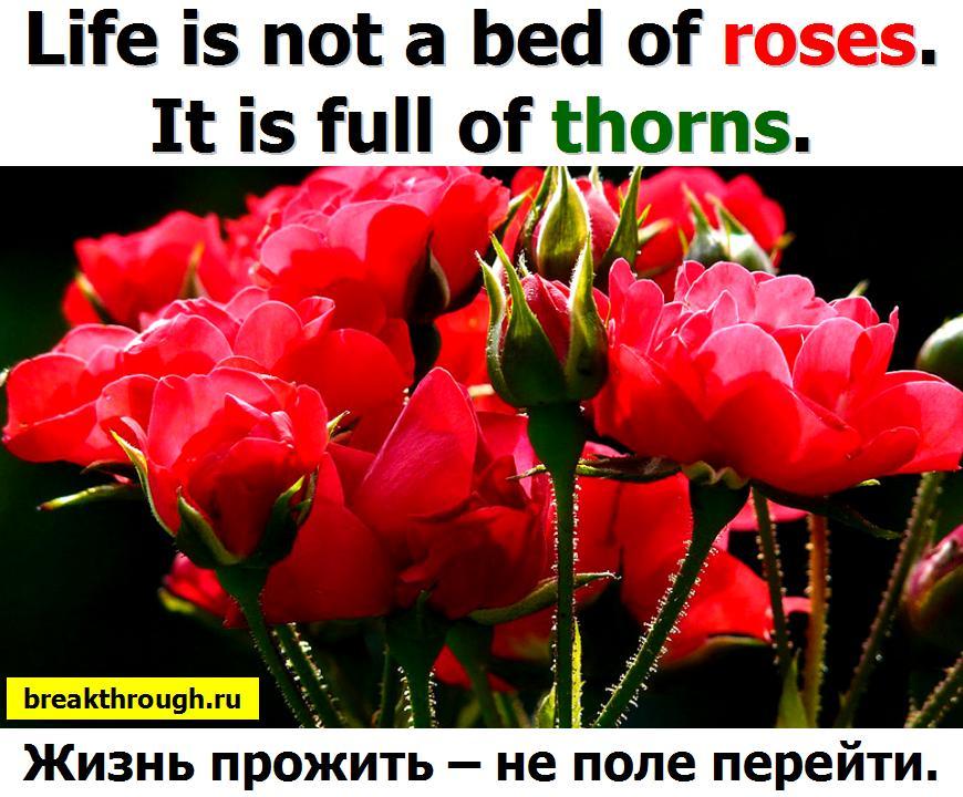 Жизнь прожить пережить не поле перейти
