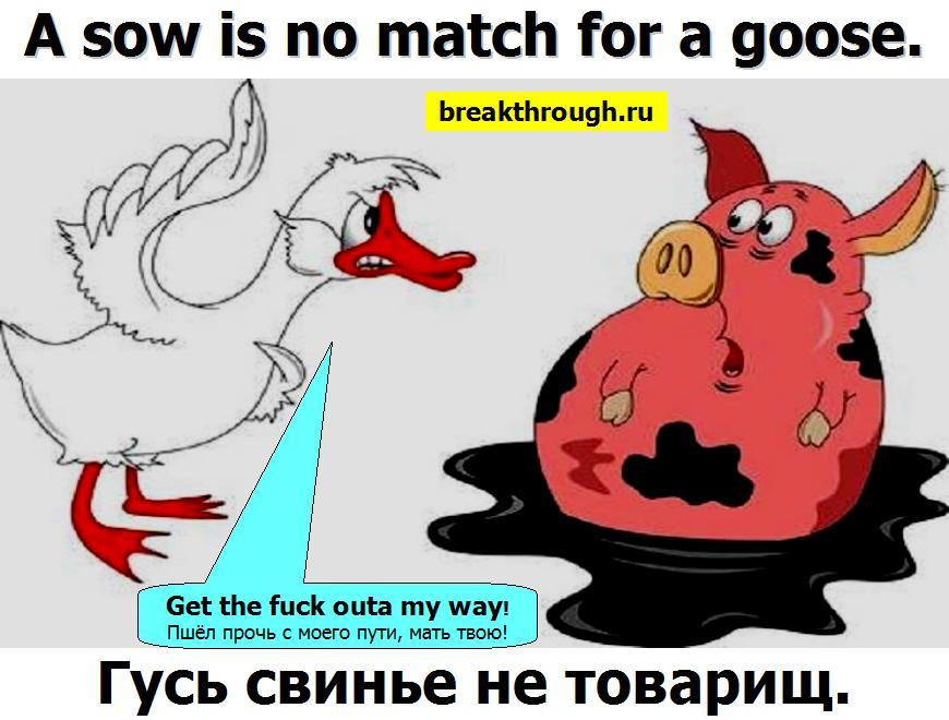 Гусь свинье не товарищ Пеший конному не попутчик