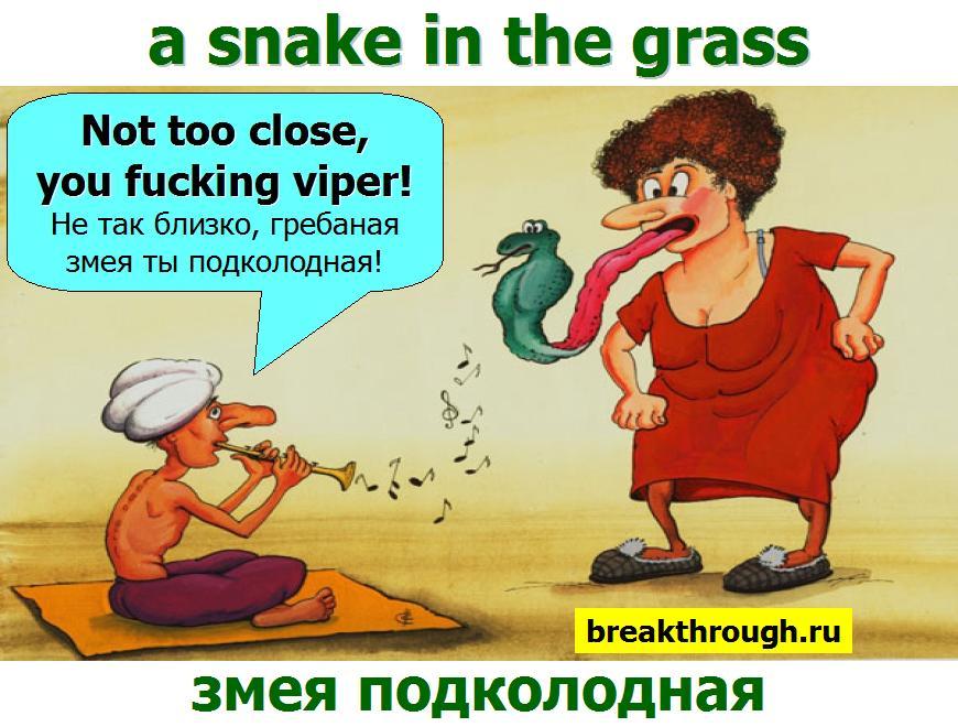 змея подколодная