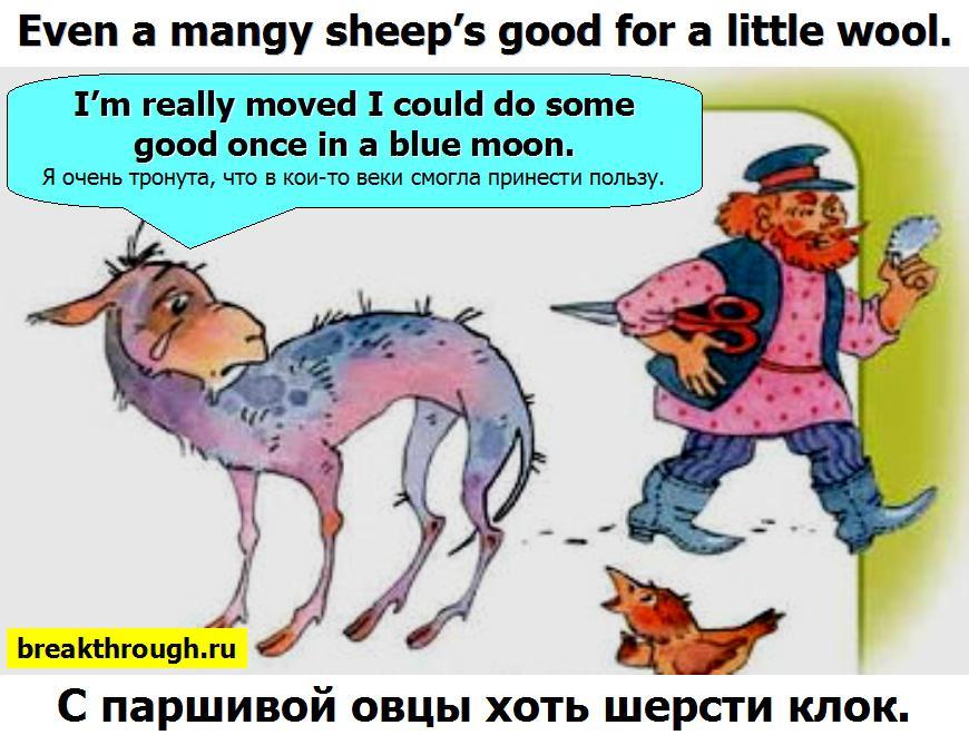 С паршивой овцы хоть шерсти клок клочок