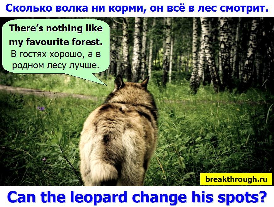Сколько волка ни  не корми он все равно в лес смотрит